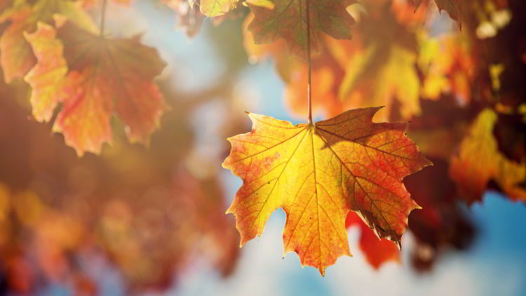 Investment Solutions Newsletter – Autumn 2016